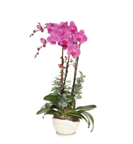 Enchanted Pink Orchids
