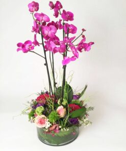 Phalaenopsis Orchids, Roses and Celosia